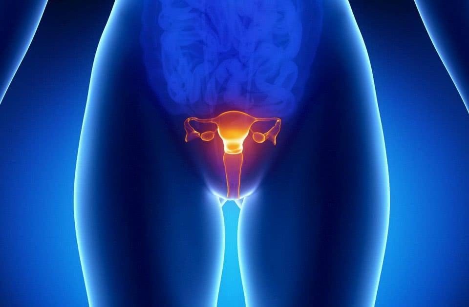 Сексуальная и репродуктивная анатомия